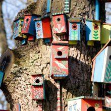 Pasaulinę miškų dieną urėdijose – inkilų kėlimo šventė