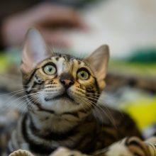 Siūloma kates ir šunis privalomai ženklinti mikroschemomis