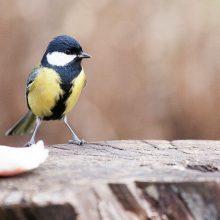 Į Lietuvą parlėkė per 40 rūšių paukščių, sodybų šeimininkams – prašymas
