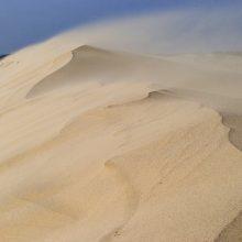 Kuršių nerijos kopas gelbėja smėlio gaudyklėmis