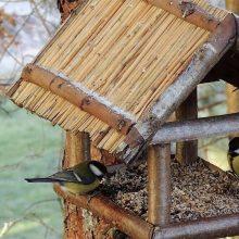 Aštuonios idėjos, kuo lesinti žiemoti likusius paukščius