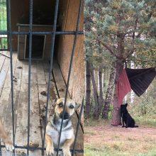 Daugėja kankinamų gyvūnų: baisi situacija globos organizacijoje pasitvirtino