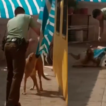 Už širdies griebianti gelbėjimo operacija: šuo iškart puolė geradariui dėkoti