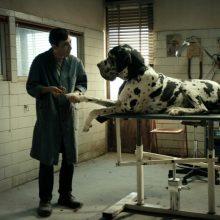Geriausiems keturkojų vaidmenims filmuose – apdovanojimas: šie šunys užkariavo širdis
