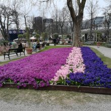 Pavasaris eina pėsčias