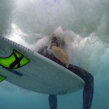 Australijoje vyras nuo ryklio apsigynė banglente