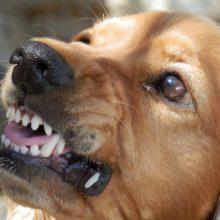 Vilniaus rajone šuo nukando mergaitei pirštą
