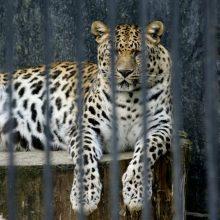 Vilniuje atveriamas naujas zoologijos sodas papiktino visuomenininkus