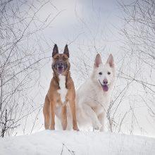 Keturios programėlės, praversiančios auginantiems šunis