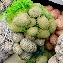 Augalų apsaugos tarnyba aiškinasi, ar bulvės neužkrėstos puviniu