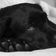Gyvūno apsinuodijimo požymiai ir pirmoji pagalba