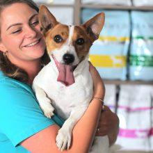 Pasisekė: gerai, kai šuo patenka į gydyklą ne dėl perkaitimo, kuris labai pavojingas šuniui.