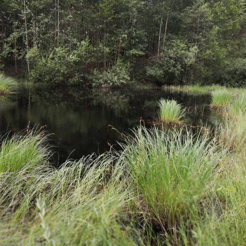 Raudonpilvės kūmutės ir baliniai vėžliai paleisti į gamtą  © Lietuvos zoologijos sodo nuotr.