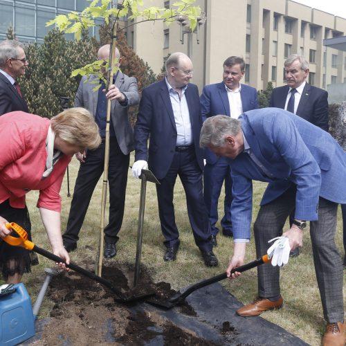 Seimo pirmininkai pasodino ąžuolą  © M. Morkevičiaus / ELTOS nuotr.