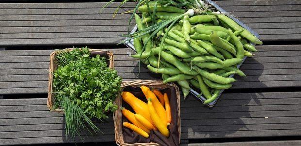 Šparaginė pupelė – daržovių karalienė, bet kai kas ją turi vartoti atsargiai