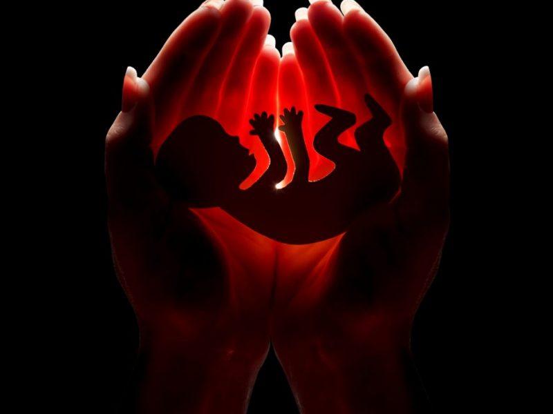 Liberalė embrionų saugojimo kaštus siūlo perkelti valstybei