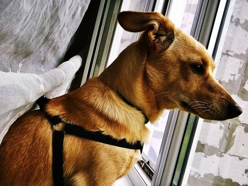 Pensininkas: kaimynės šuns kaukimas varo iš proto