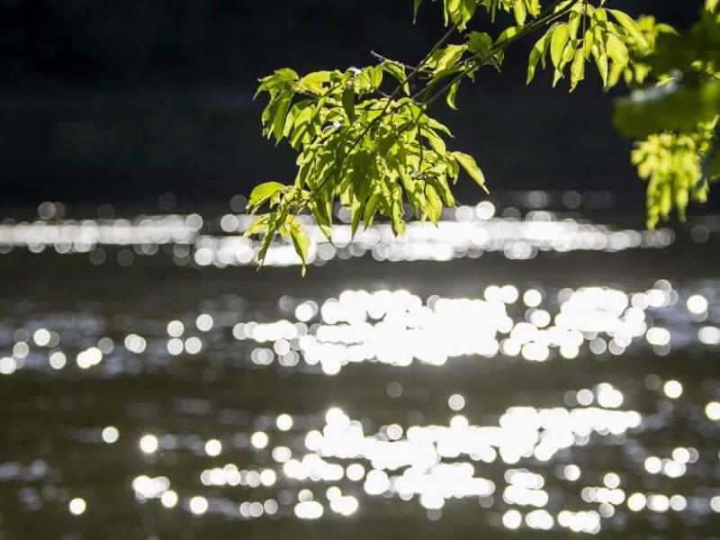 Molėtų rajone rastas prieš mėnesį ežere nuskendusio vyro lavonas