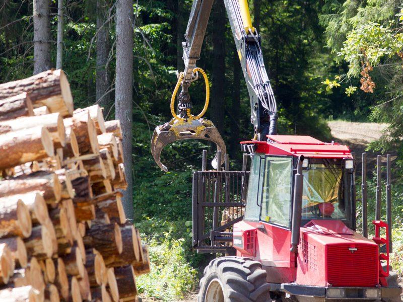 Premjeras su aplinkos ministru aiškinsis situaciją dėl kertamų miškų