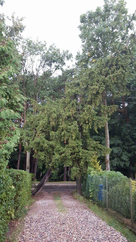Lietuvoje siautė audra: virto medžiai, elektros neturėjo tūkstančiai žmonių