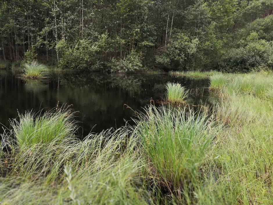 Raudonpilvės kūmutės ir baliniai vėžliai paleisti į gamtą