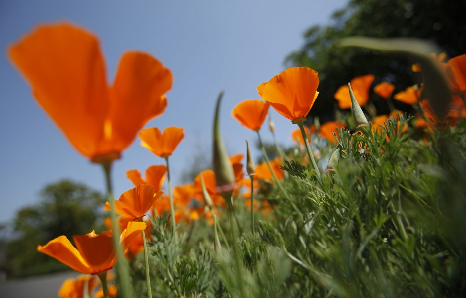 Ko saulėtoje Kalifornijoje vaikai mokomi ekologiniame sode?
