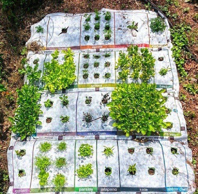 Pradedantiems daržininkams – gyvas daržo augalų kilimas