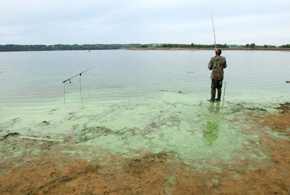 Sužaliavusios Kauno marios – rojus žvejams