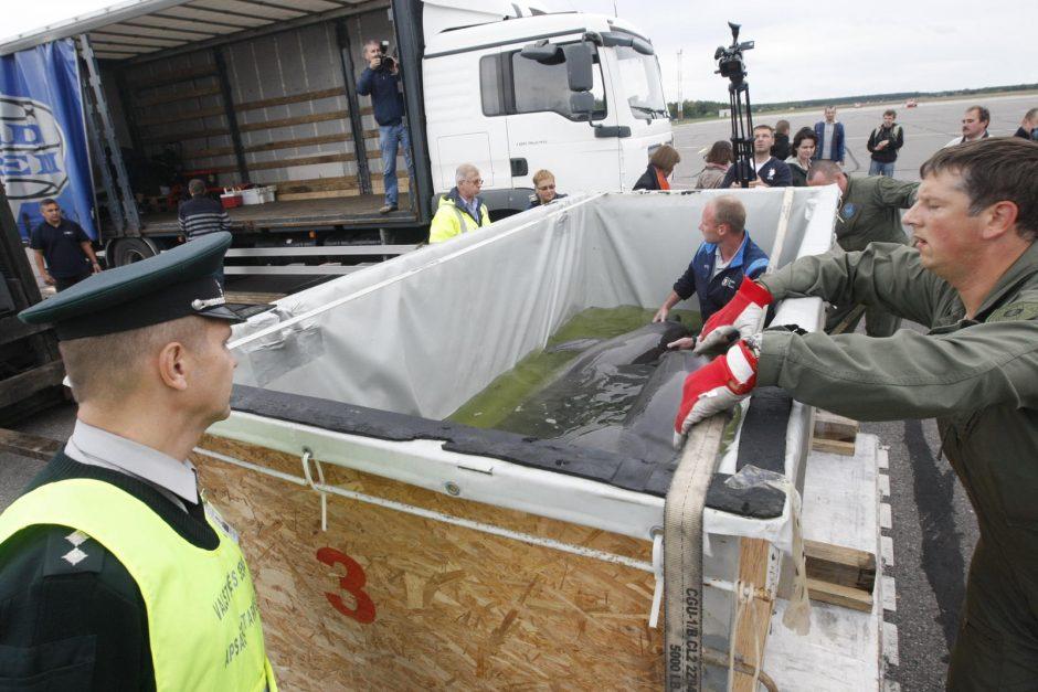 Lietuvos kariškiai iš Graikijos į Klaipėdą saugiai parskraidino keturis delfinus