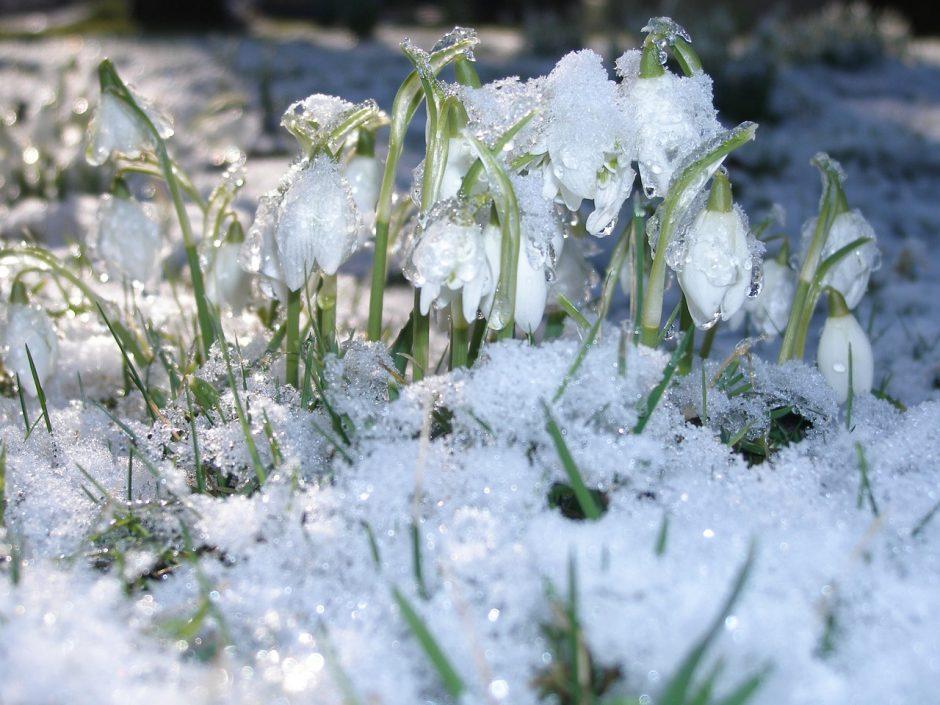 Orai: sinoptikai žada šiltesnes permainas, bus šlapia