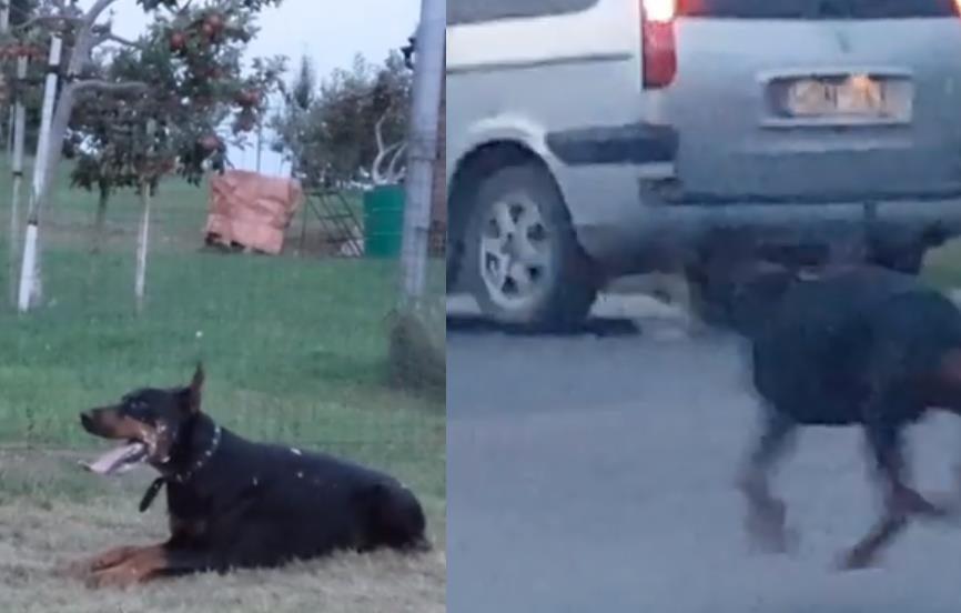 """Veterinarijos gydytoja pasibaisėjo tokia """"treniruote"""": šuo nuvirto netoli gatvės"""