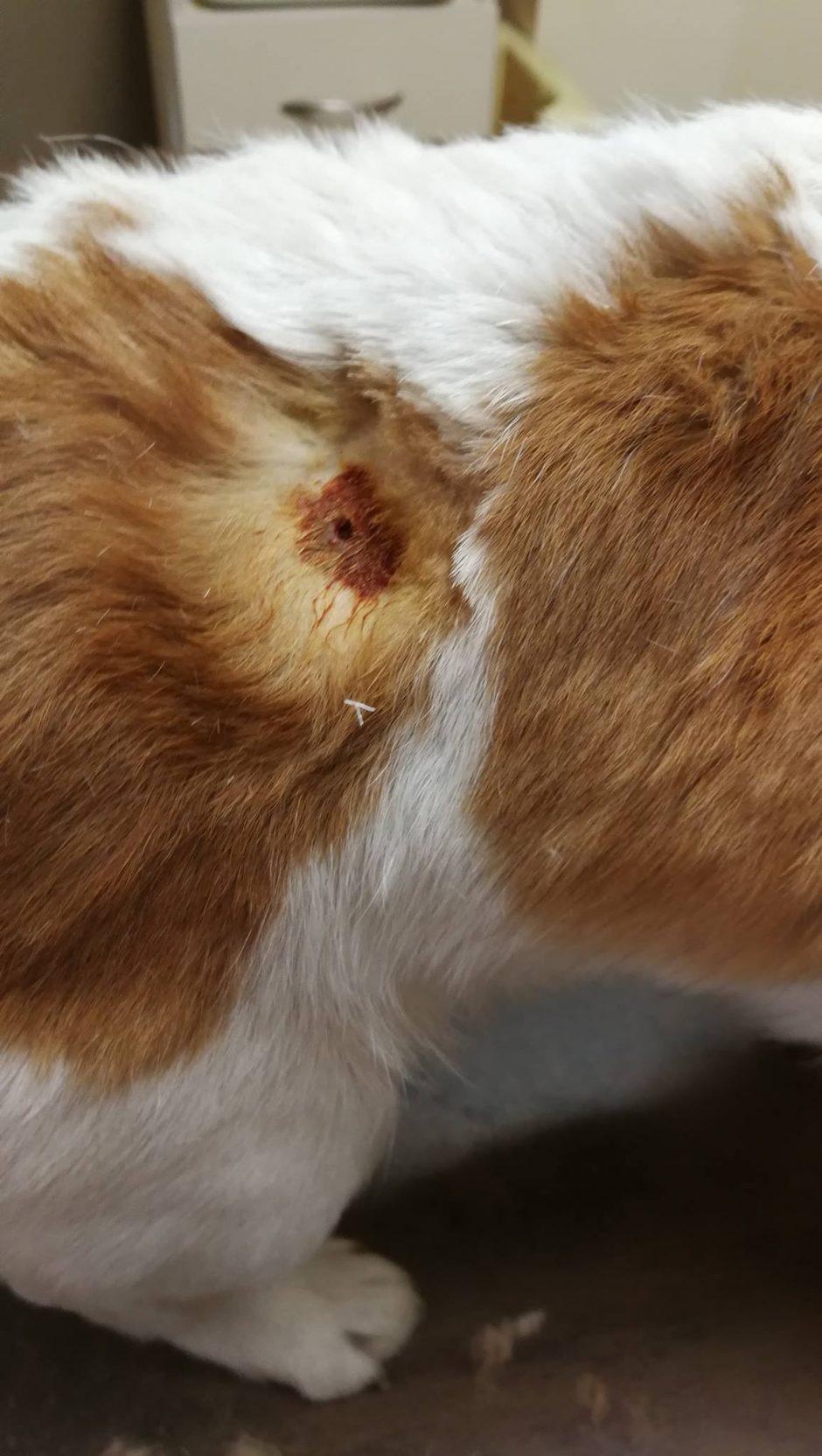 Veterinarai kraupsta: Dituvos soduose – gyvūnų egzekucijos