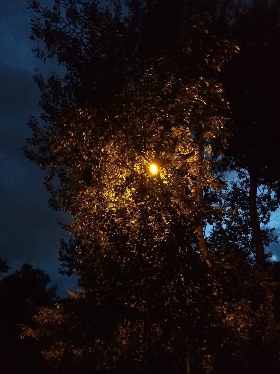 Kaunietis piktinasi: medžius pjauna ne ten kur reikia