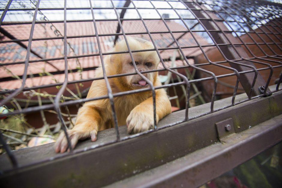 Zoologijos sodo rekonstrukciją į savo rankas perima ministerija