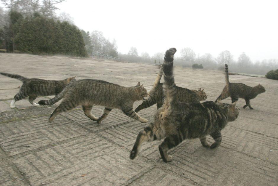 Prieglaudoje beglobiams gyvūnams ankšta