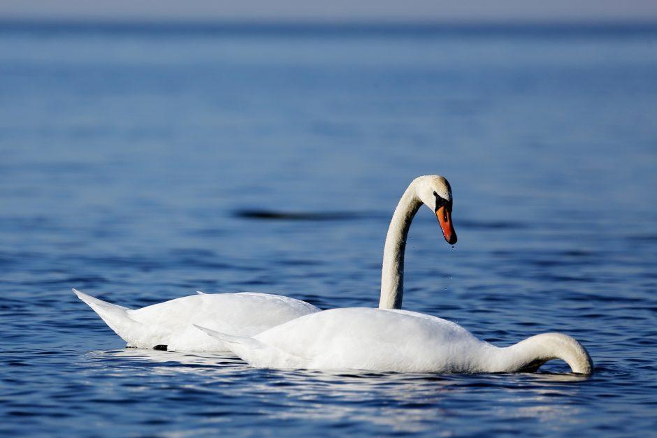 Perspėja dėl paukščių lesinimo: tai gali ir pakenkti