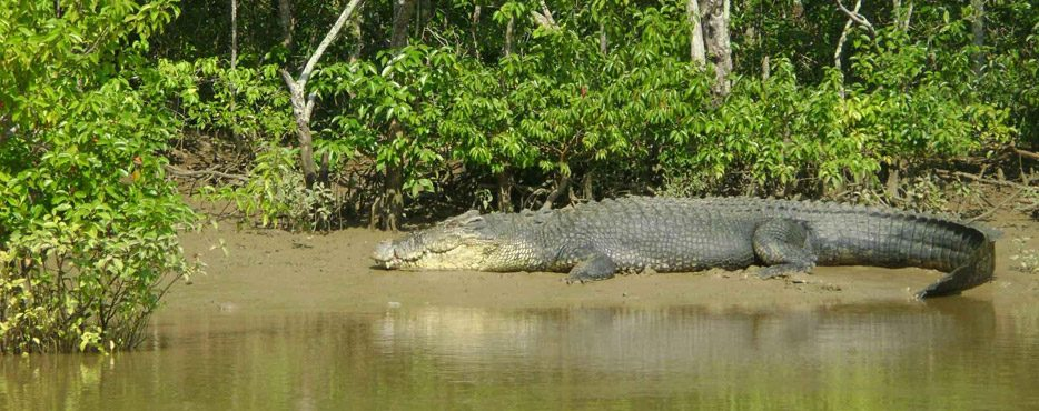 Dvi dienos tarp krokodilų