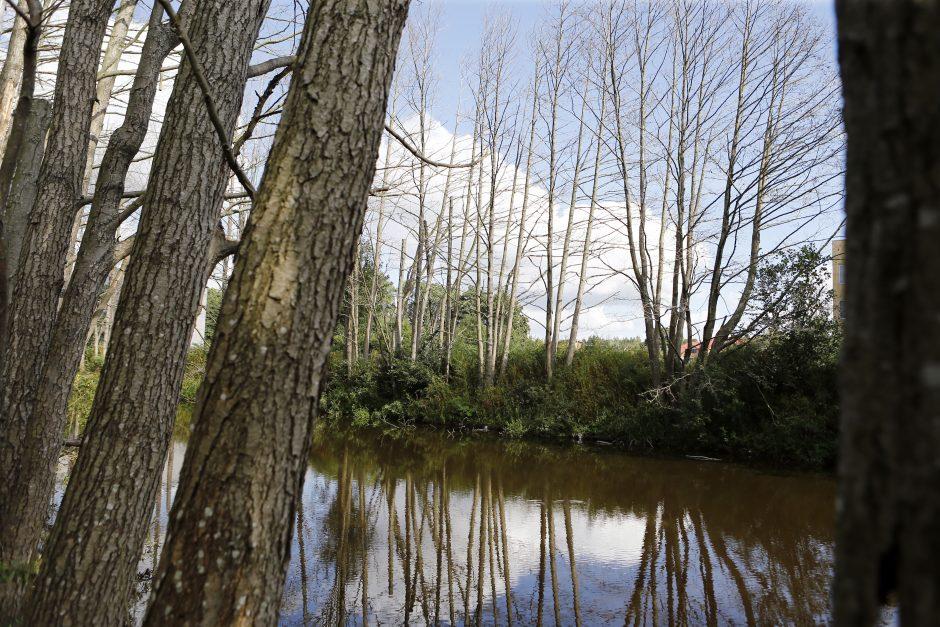 Dėl numarintų medžių Palangos meras kreipėsi į prokuratūrą