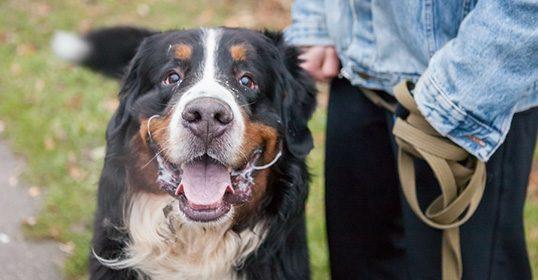 Pareigūnai tikrino, ar vilniečių šunys identifikuoti mikroschemomis
