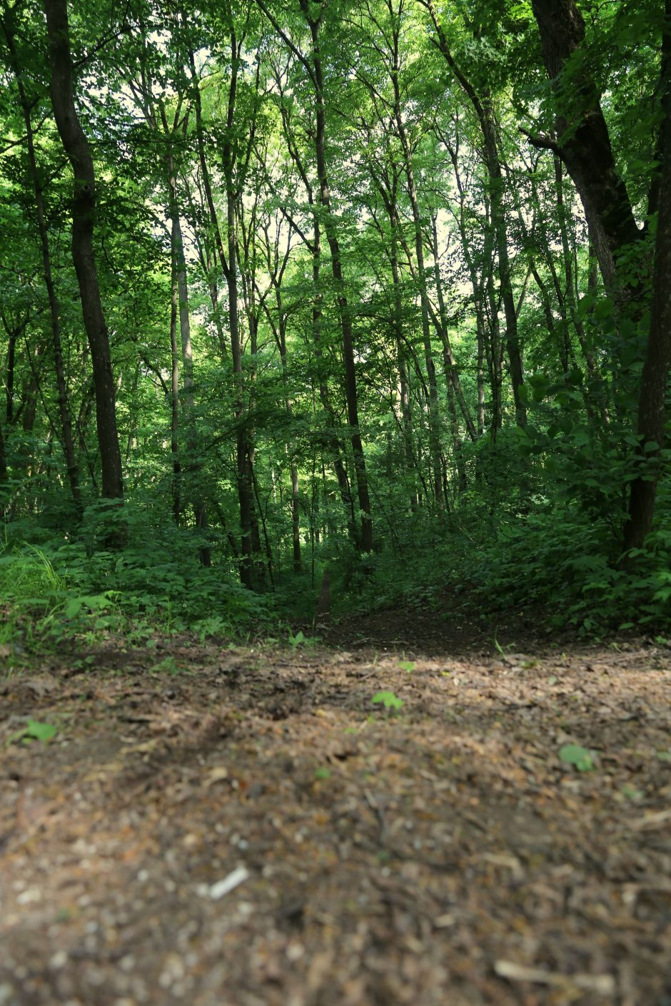 Kauno rajone – naujas pažintinis takas gamtos mylėtojams