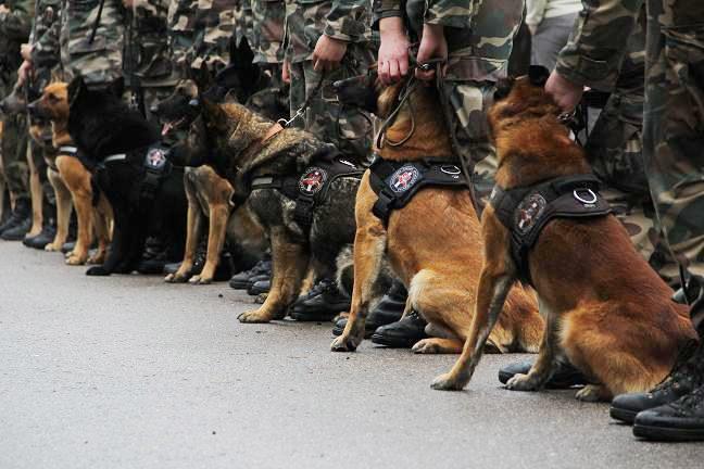 Trys šunys padėjo sulaikyti pažeidėjų ketveriukę