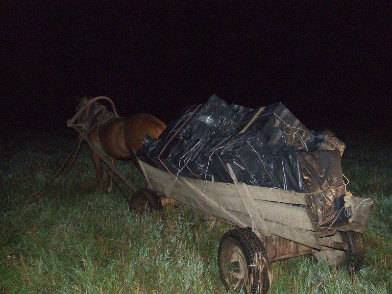 Arklio tempiamame vežime – stirta kontrabandinių cigarečių dėžių
