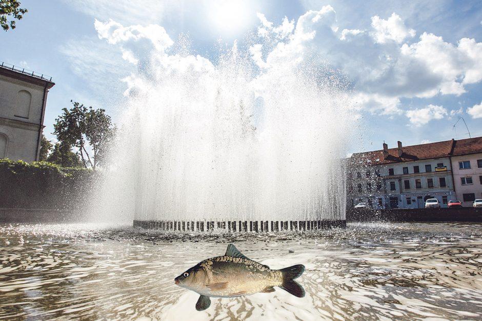 Įžūlūs pokštai: Kauno fontanuose – gyvi karpiai