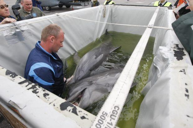 Iš Atėnų į uostamiesčio delfinariumą grįžo dar trys delfinai