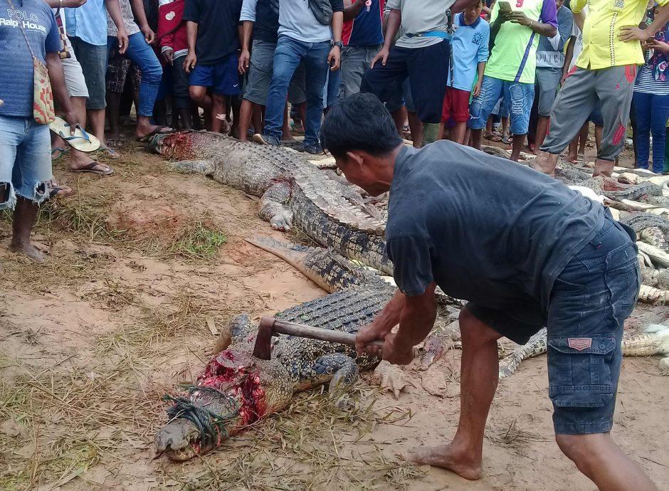 Minios kerštas: žmonės nugalabijo 300 šimtus krokodilų