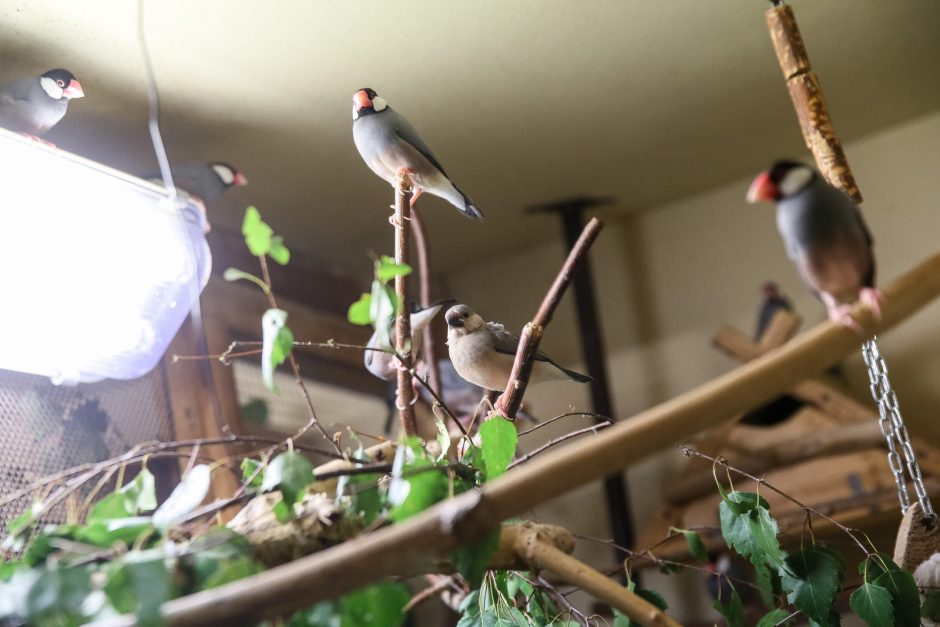 Zoologijos sodo sparnuočiai