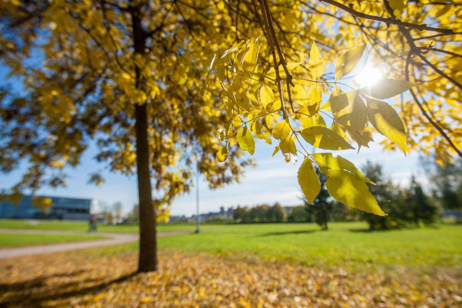 Orai neskubės subjurti: šiluma ir saule mėgausimės dar ilgai