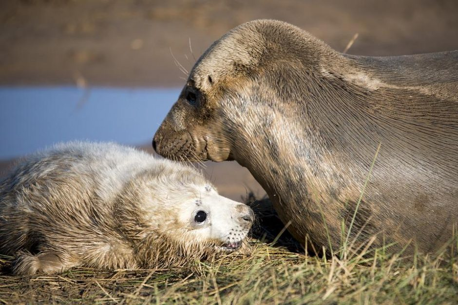 Šveicarija uždraudė daugelio ruonių produktų importą