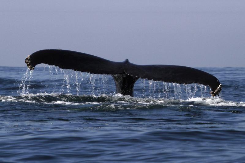 Niujorke nugaišo į krantą išmestas stambus banginis