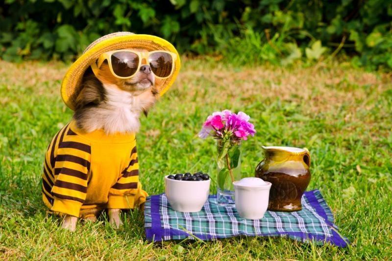 Vaizdo siužetuose - juokingiausios 2012-ųjų gyvūnėlių išdaigos